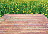 Wooden table on a background field of dandelions — Stock Photo
