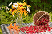 Red currants and bouquet of chamomiles and cone flowers — ストック写真
