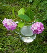 Small vase with two hydrangea flowers on the grass — Stock Photo