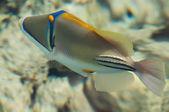 Picasso fish — Stock Photo
