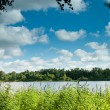 Landscape  pond, grass, forest at the horizon and clouds on the sky — Stock Photo
