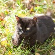 Black cat laying on the grass — Stock Photo