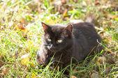 Chat noir couché sur l'herbe — Photo