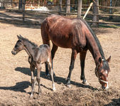 Horse and its foal standing — Stock Photo