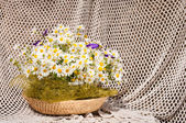 Still life bouquet of chamomiles — Stockfoto