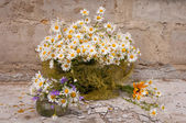 Still life bouquet of chamomiles — Stock Photo