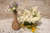 Still life bouquet of chamomiles — Stock Photo