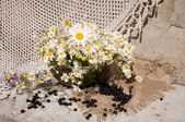 Still life bouquet with chamomiles — Stockfoto