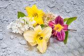 Flowers in a rainy day — Stock Photo