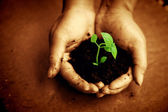 Environmental Care — Stock Photo