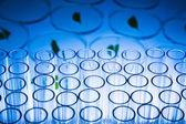 Leaves on Petri Dish — Stock Photo
