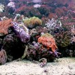 Foto Stock: Beautiful coral reef in background sea aquarium