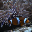 mariene vis in het aquarium — Stockvideo
