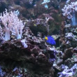 pesci marini nell'acquario no.02 — Video Stock