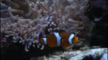 在水族馆海洋鱼 — 图库视频影像