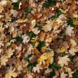 Leaves fall in November No. 01 — Stock Photo