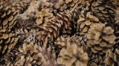 Pine Cones nice and dry and some are open up. — Stock Video