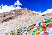Dağ rangre — Stok fotoğraf