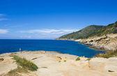 島のユリ — ストック写真