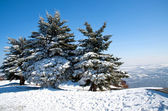 Snow-covered ate — Stock Photo