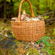 Wattled basket with mushrooms — Stok fotoğraf