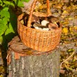 Wattled basket with mushrooms — Stock Photo