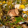 Stock Photo: Fungus grows in autumn grass