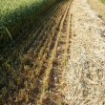 Green wheat field — Stock Photo #28620737