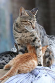 Protective cat — Stock Photo
