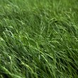 Fresh green grass of meadow — Stock Photo #28589521