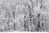 Snowy winter forest scene — Stock Photo