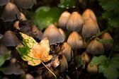 Autumn mushrooms close-up — Stock Photo