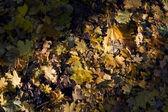 Foglie cadute colorati — Foto Stock