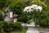 Flowers in cemetery — Stock Photo
