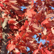 Fall trees and leaves put on a colorful show — ストック写真