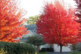 Bright Red and Fall Orange leaves on trees bordering Town Homes — Stock Photo