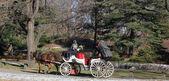 Cavalo e a carruagem andam de inverno com pessoas desfrutando de um dia de inverno no central park, Nova Iorque — Fotografia Stock