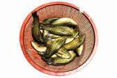 Asya'nın kırsal piyasada doğadan tatlı su balığı — Stok fotoğraf