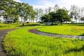 Best beautiful the green grass meadow field and tree in sun ligh — Stock fotografie