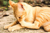 Portrait of thai cat cute happy relax at monday — Stock Photo