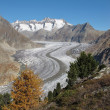 Aletsch Glacier and trees — Stock Photo