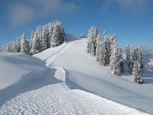 Ski slope and snow covered trees — Stock Photo