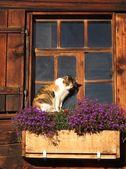 Çiftçiler kedi — Stok fotoğraf