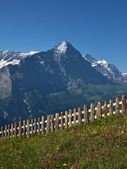 Meadow With Flowers In Front Of The Eiger — Stock Photo
