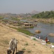 Tungabhadra river and cow, Hampi, India. — Stock Photo