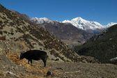View from Khangsar — Stock Photo