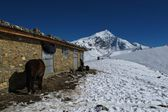 Scene near Thorung La Pass, Nepal — Stock Photo