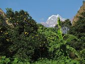 Snow capped mountain and lemon tree — Stock Photo