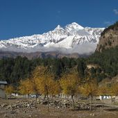 Colorful trees and Dhaulagiri, seventh highest peak in the world — Stock Photo