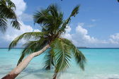Palm on the beach of Indian Ocean, Maldives — Stock Photo